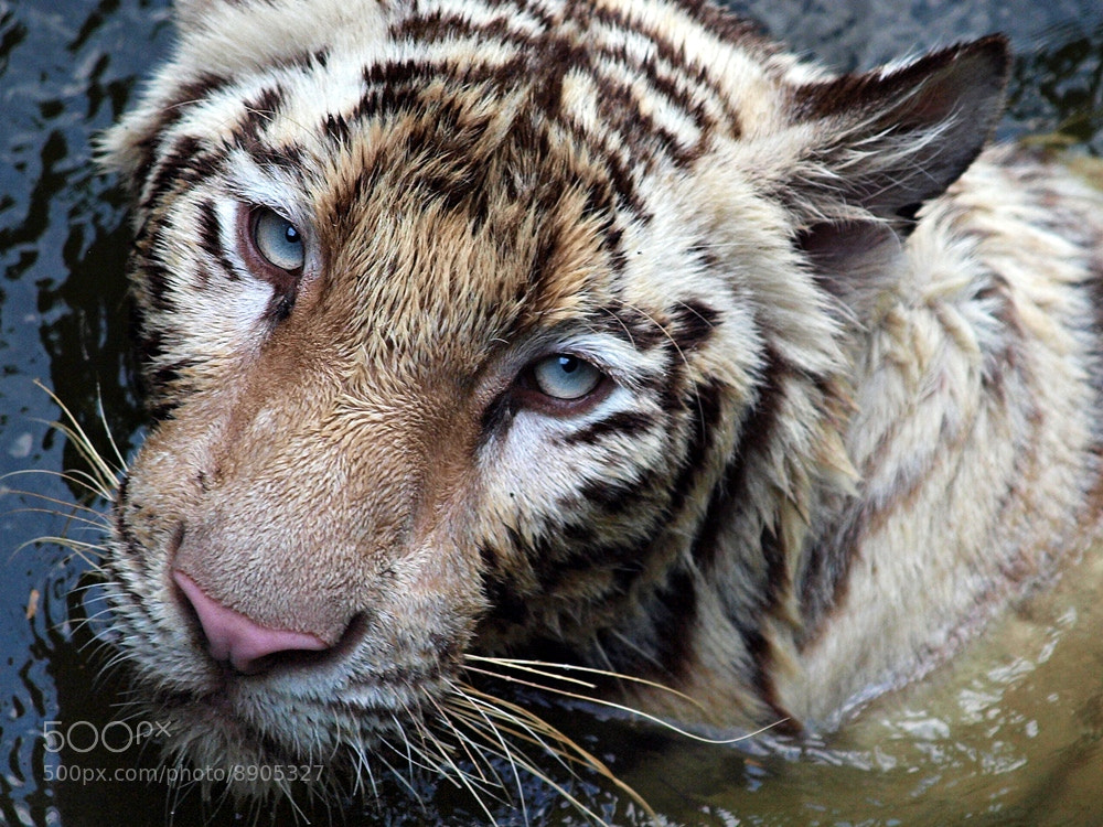 Photograph up, close & personal by Irawan Subingar on 500px