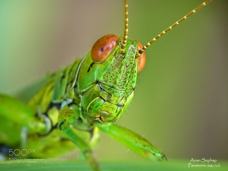 """Photograph """"0"""" by Anan Suphap on 500px"""