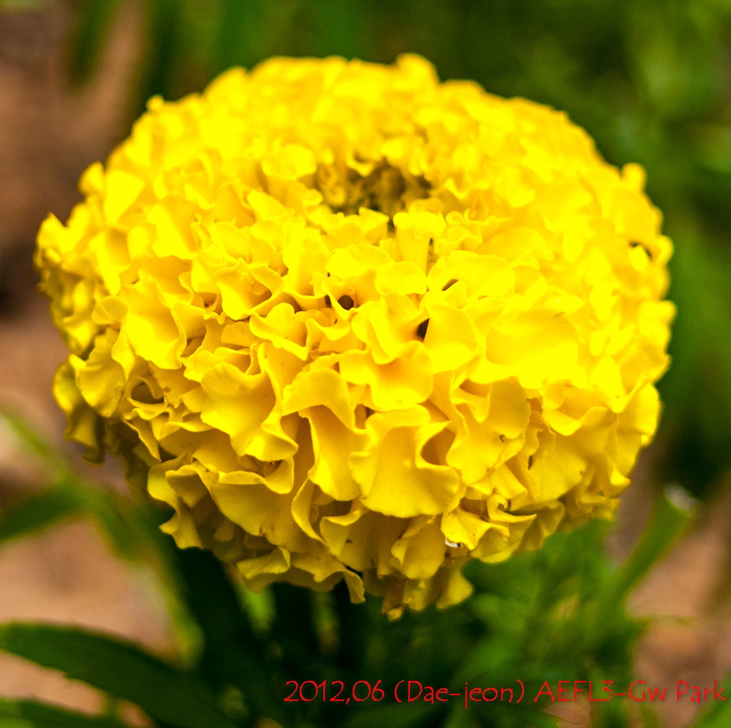 Photograph Yellow flowers by GW Park on 500px