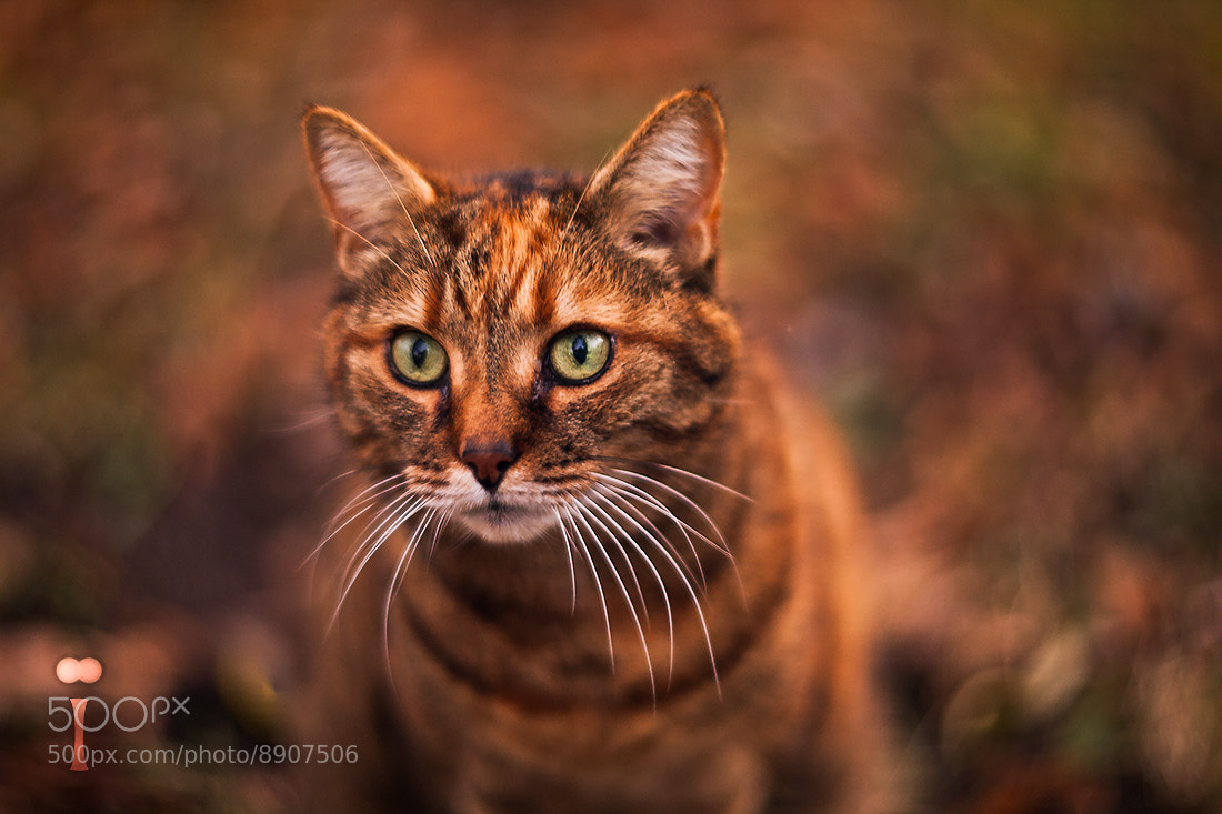 Photograph In Autumn All Cats Aren't Grey... by Romain Matteï on 500px