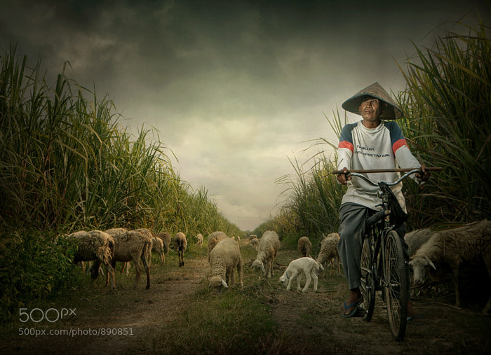 Photograph ngadino by Teuku Jody  Zulkarnaen on 500px