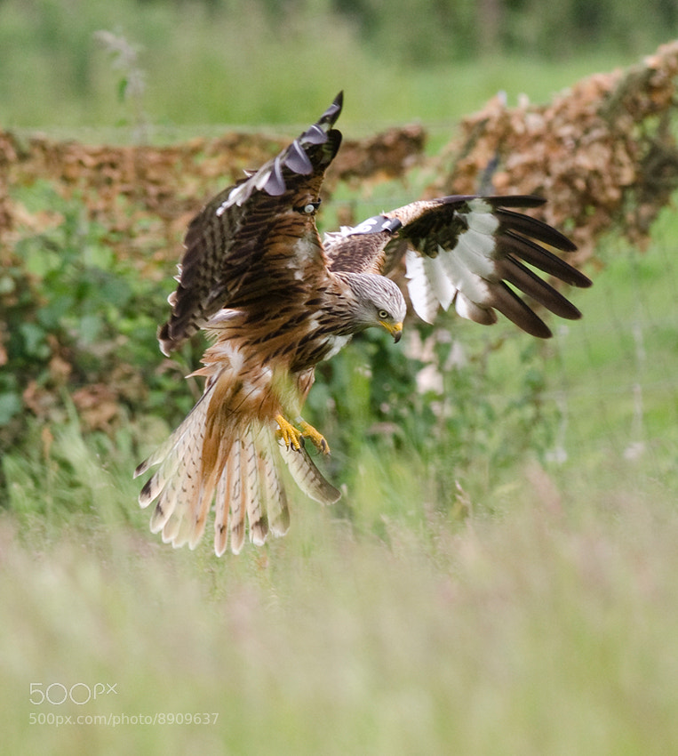 Photograph The Landing by Gerwyn Williams on 500px