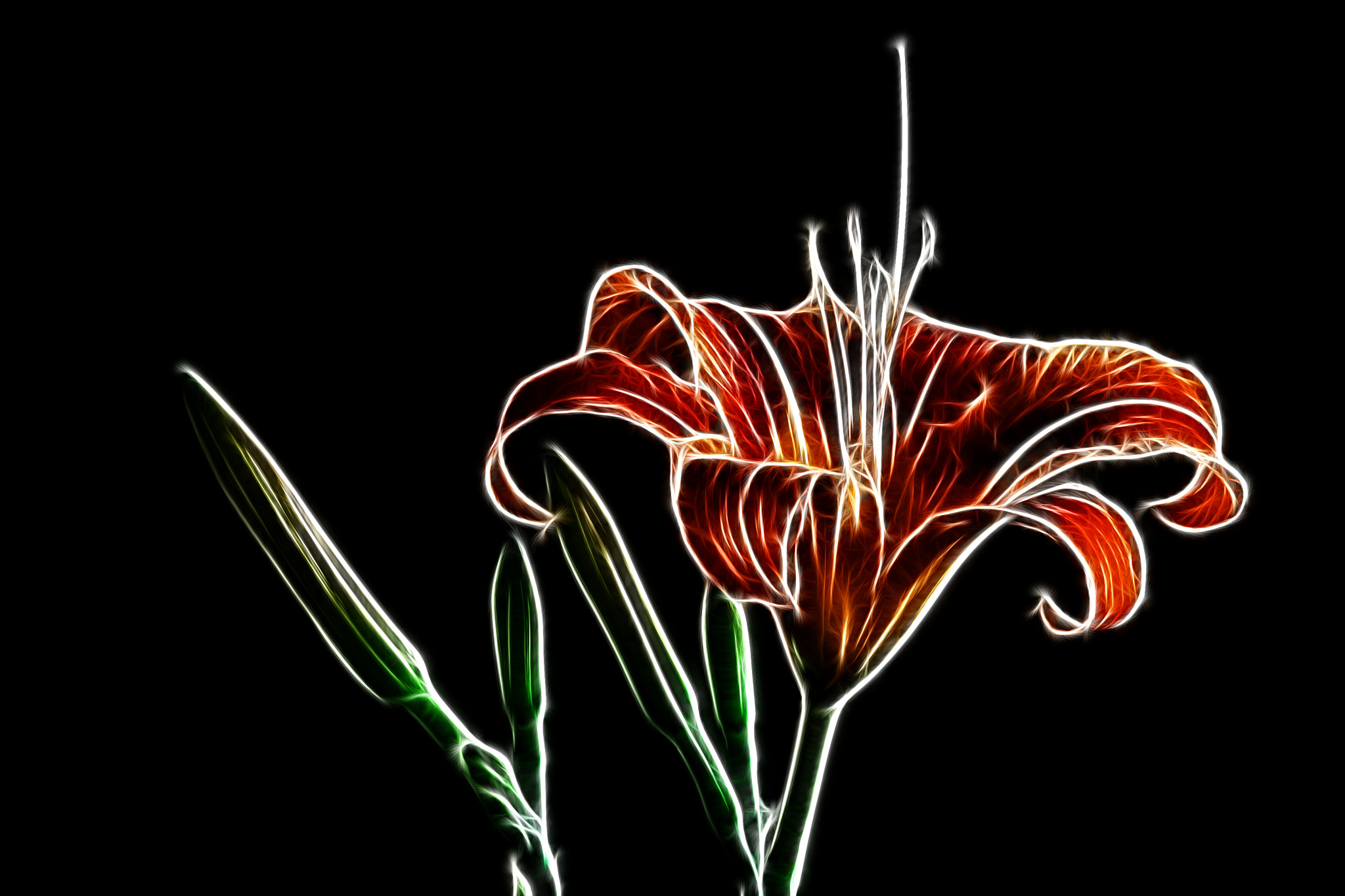 Photograph Glowing lily by Vendenis   on 500px