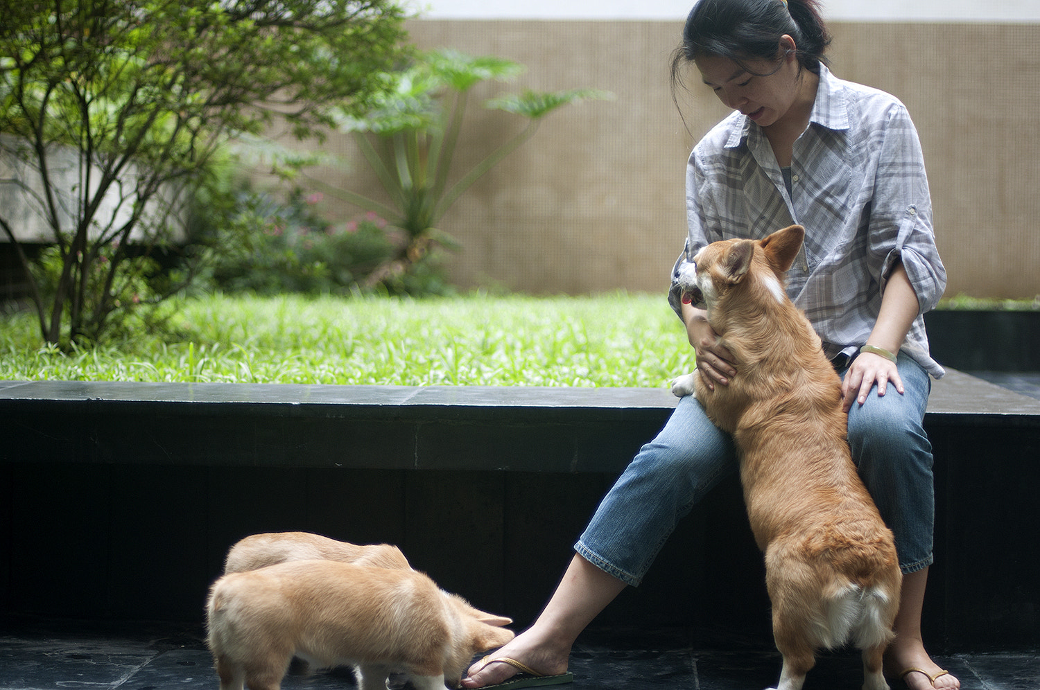 Photograph Ying & dogs by F. Daniel on 500px