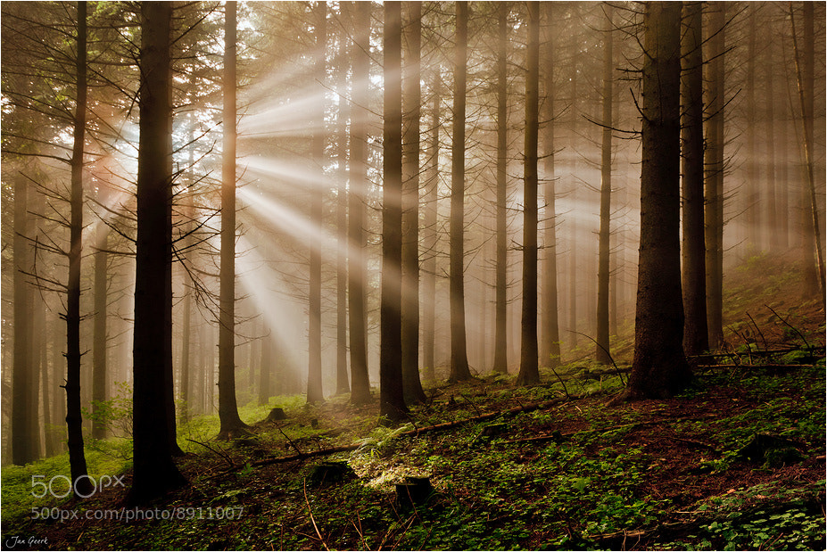 Photograph Fairy Forest by Jan Geerk on 500px