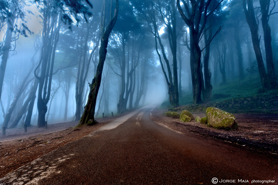 Photograph The road of kings by Jorge Maia on 500px