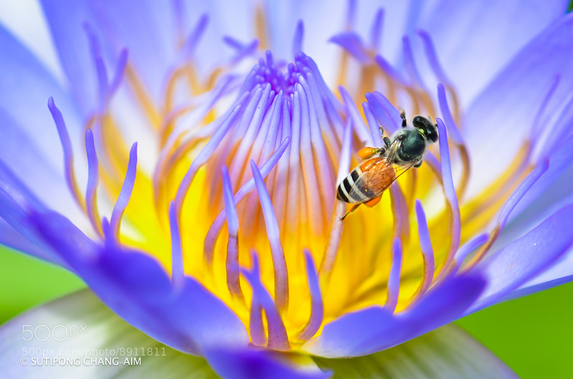 Photograph bloom by Sutthipong Changaim on 500px