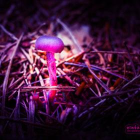 Mushroom | Pilz
