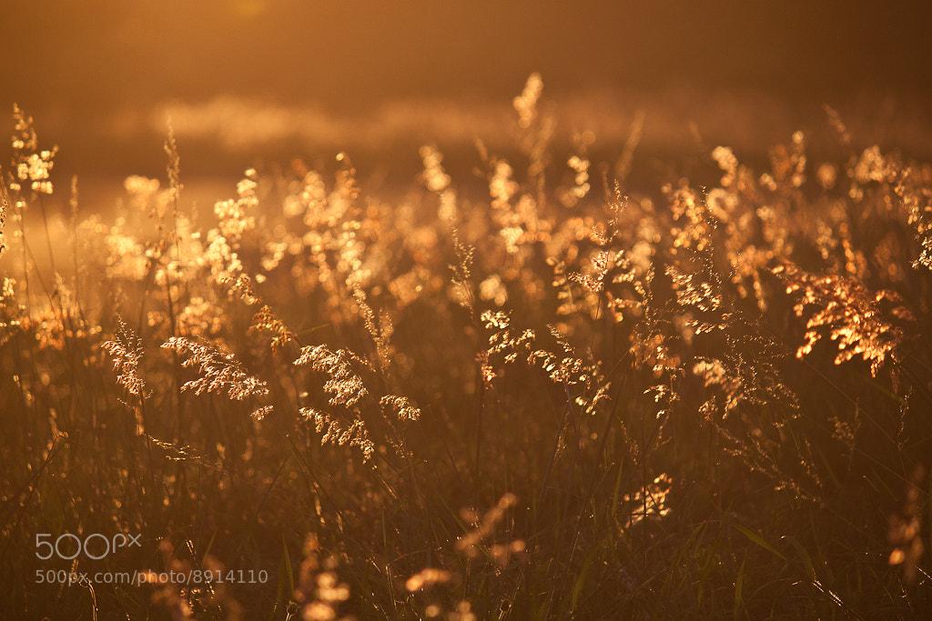 Photograph Golden Hour by Luis Guzman on 500px