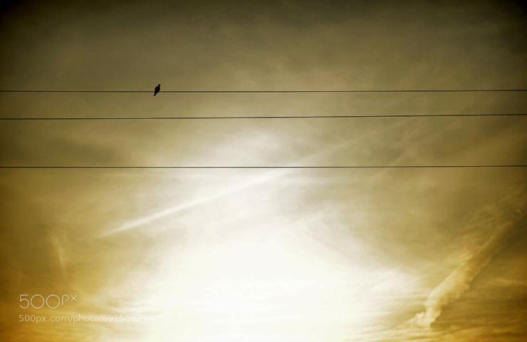 Photograph Bird notes ... by Manuel Orero on 500px