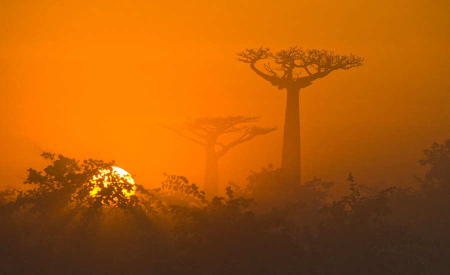 Photograph Morning sun baobab by ANDREY GUDKOV on 500px