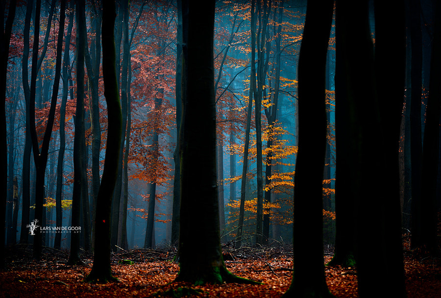 Enchanted by Lars van de Goor on 500px.com