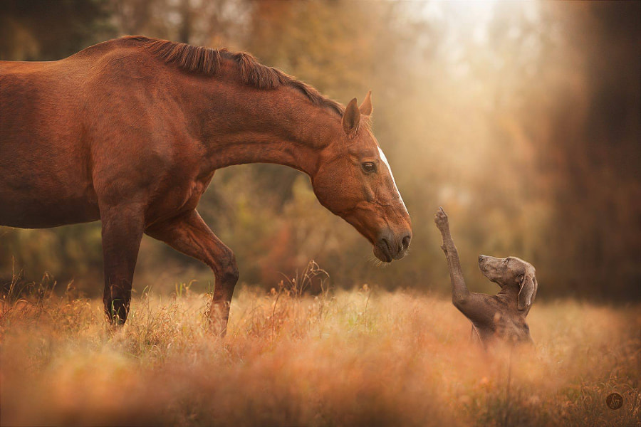 hey, friend. by Hannah Meinhardt on 500px.com