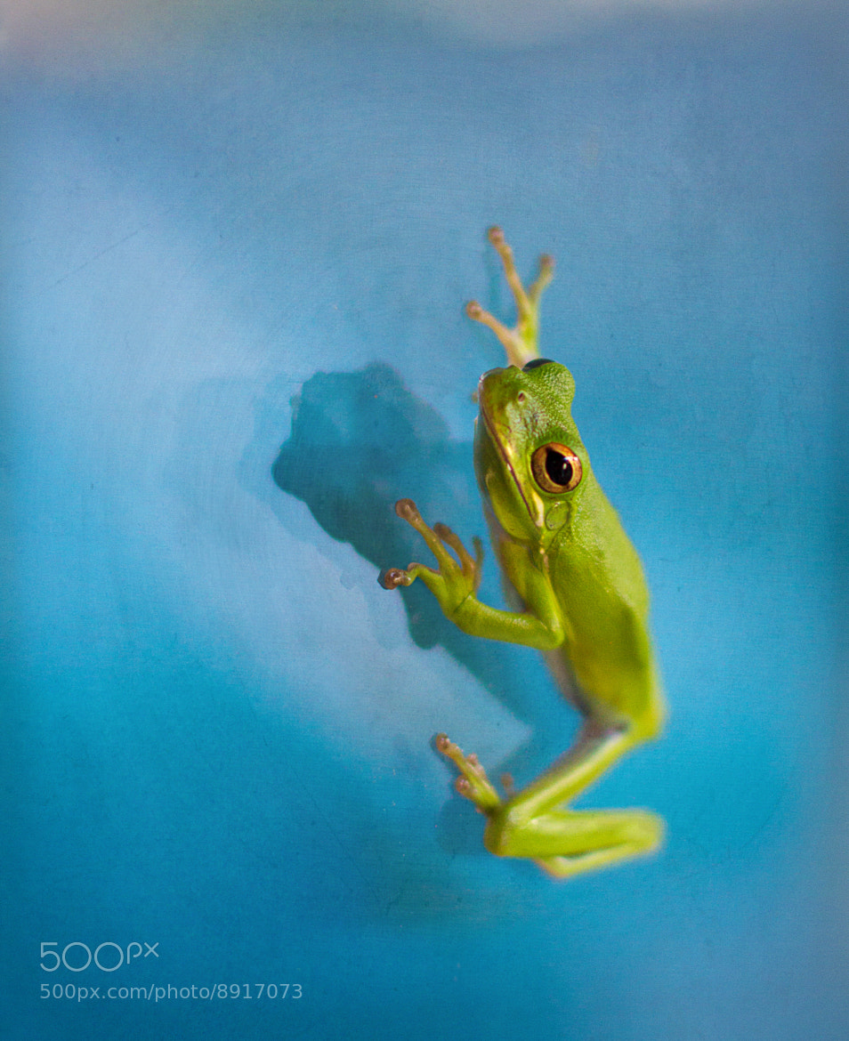 Photograph Ribbit by Wanda Hollis on 500px