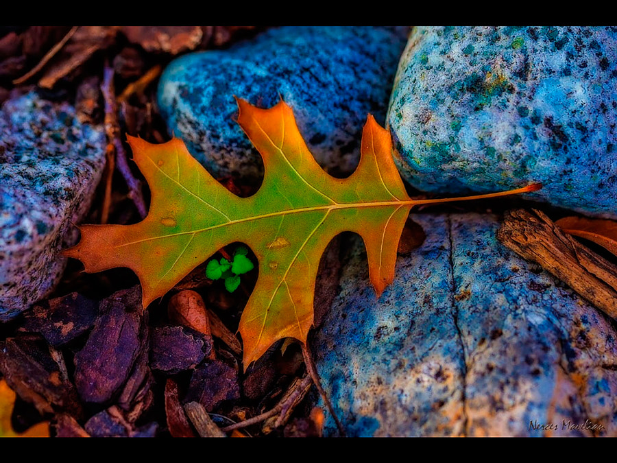 Love the Fall colors nature provides us, even down on the ground, in a single leaf