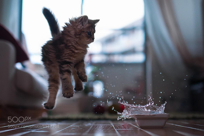 Photograph Kitten in Motion by Ben Torode on 500px
