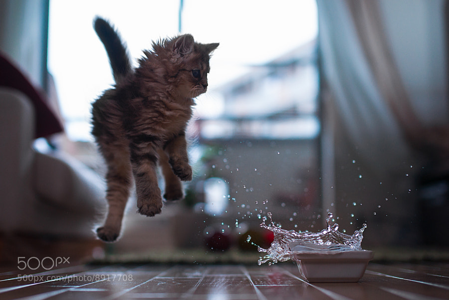 Action photograph of a cat jumping