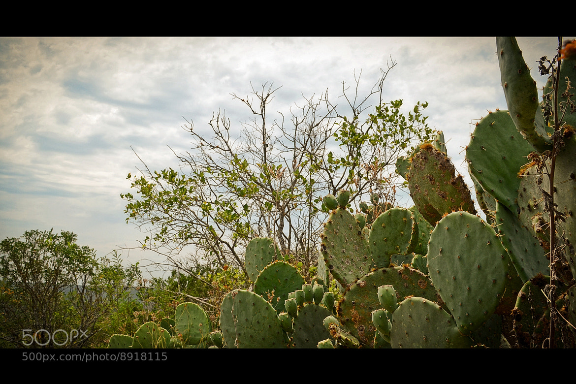 Photograph Cacti Nation by Joe Andrews on 500px