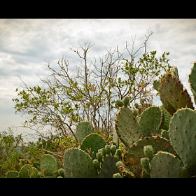 Cacti Nation by Joe Andrews (Thirty12)) on 500px.com