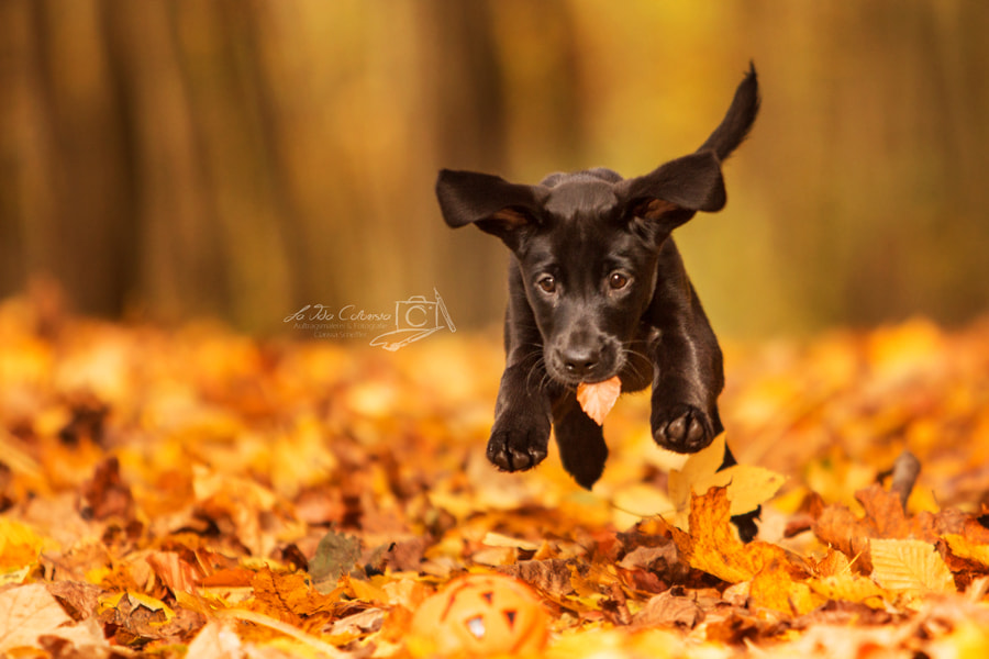 Photograph Flying puppy by Clarissa Scheffler on 500px