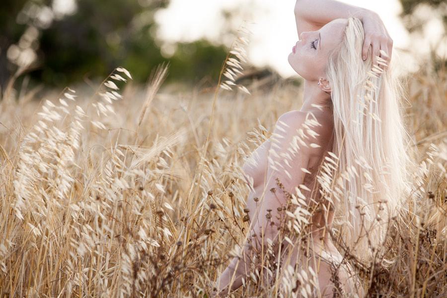 whispering cornfield - 2