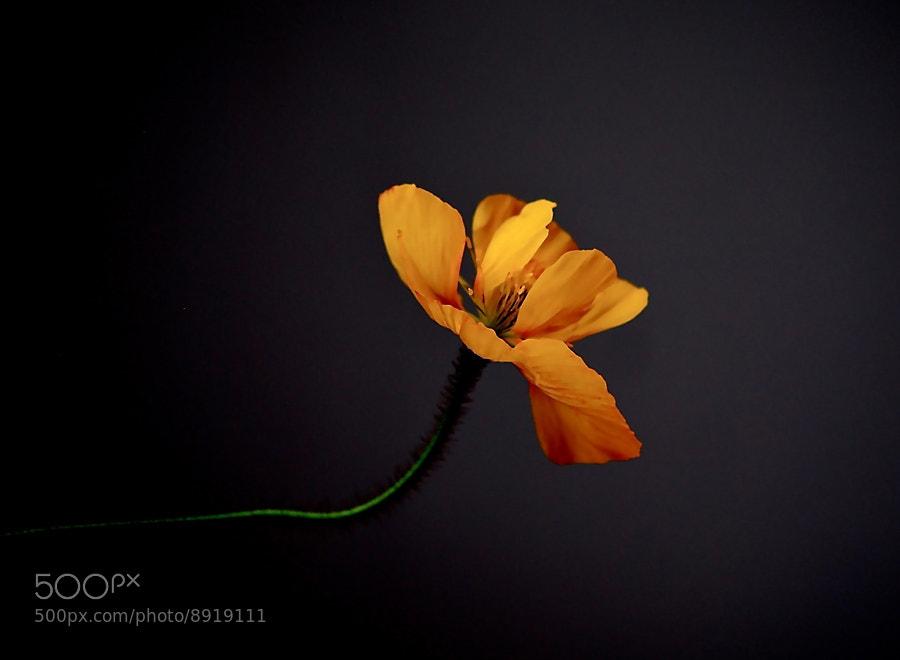 Photograph Shine in the dark by Sirinat Tanamai on 500px