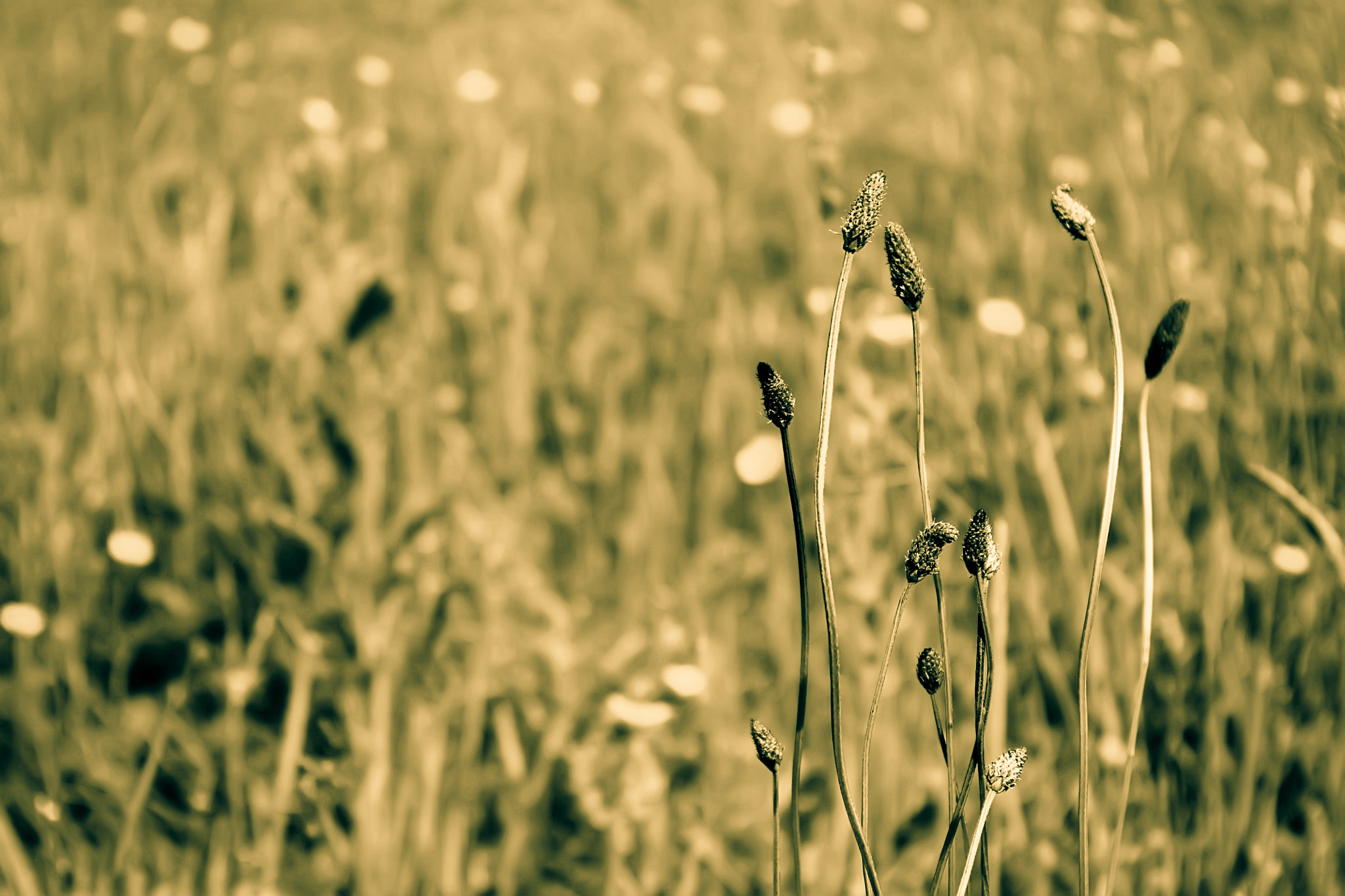 Photograph Weeds by Ahmed Fayadh on 500px