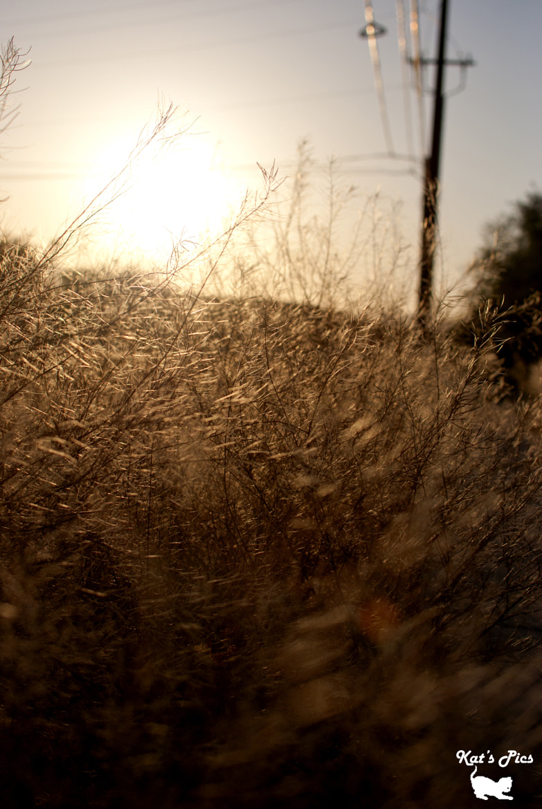 Photograph More Dried Up Weeds by Katheryn Navas on 500px