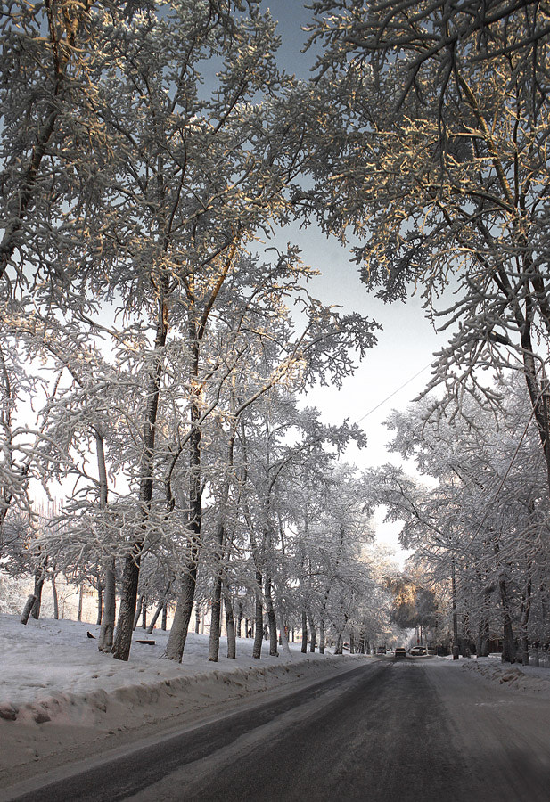 Photograph Winter by Elena Storm on 500px