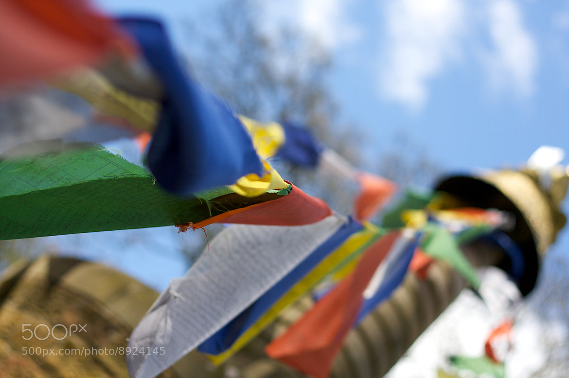 Photograph Flags in Bloom by Joel Harratt on 500px