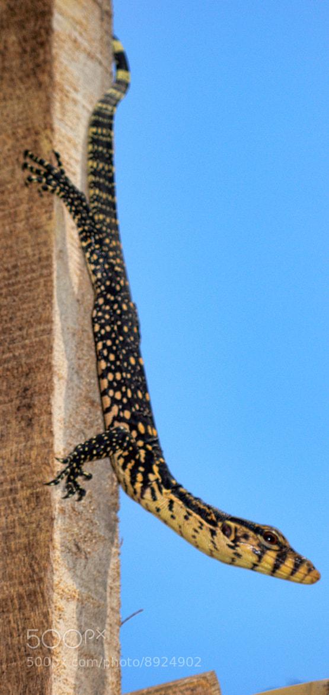 Photograph Lizard #01 by Marco cavallari on 500px
