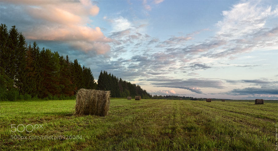 Photograph Russian field by Alexander Martynov on 500px