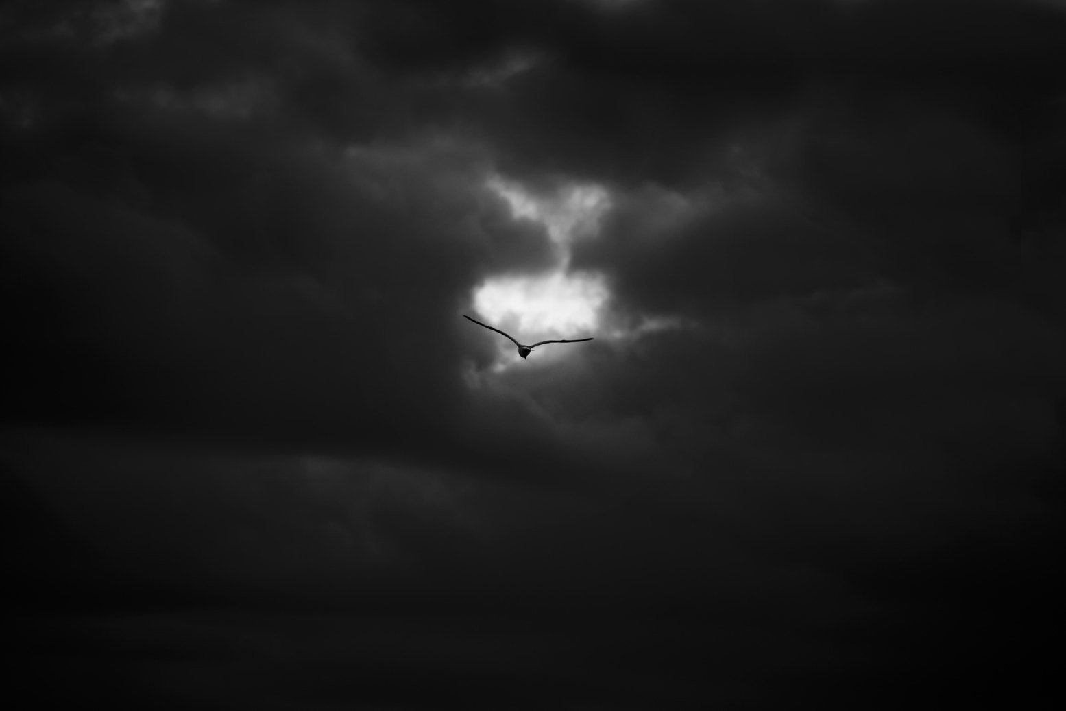 Photograph Flight of the seagull by Henning Evju on 500px