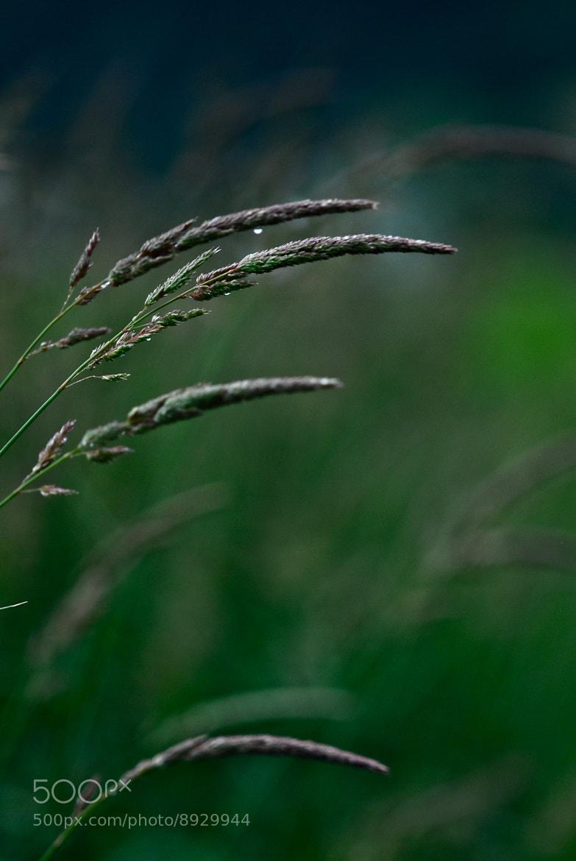 Photograph Calm by Claire Sianna Seaman on 500px