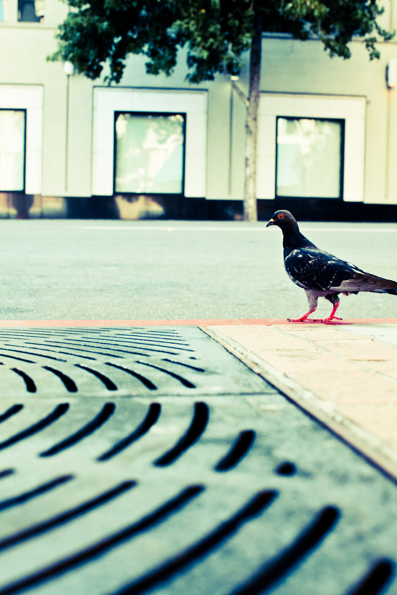 Photograph bird on the street by Christopher Bower on 500px