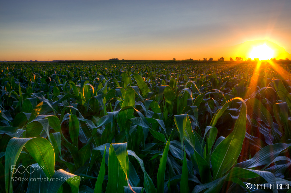 Photograph Cornfield at Sunrise by Sean Landsman on 500px