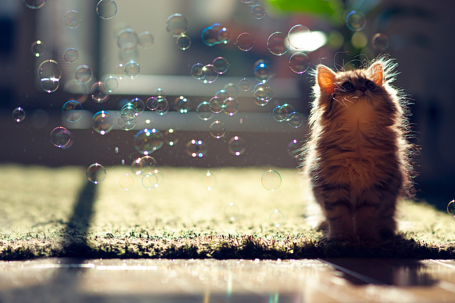500px.comのBen TorodeさんによるKitten Observes Transit of Bubbles