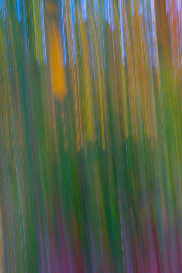 Photograph Hiding in a cornfield by Instant Kamera on 500px