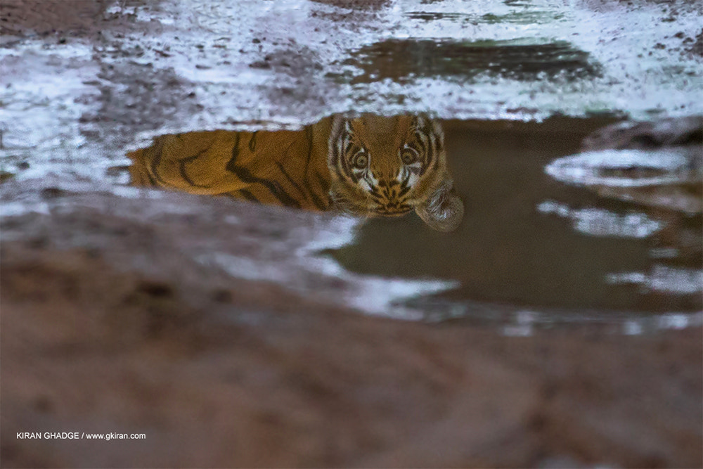 Photograph Reflection  by Kiran Ghadge on 500px