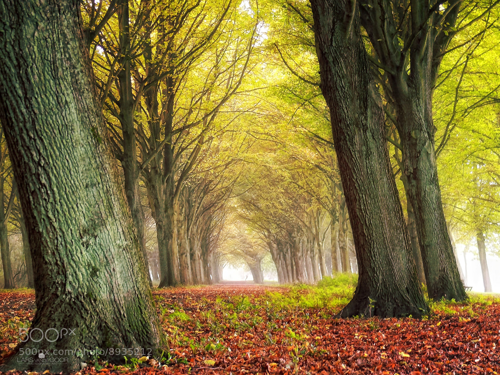 Photograph Amsterdam Forest by Lars van de Goor on 500px