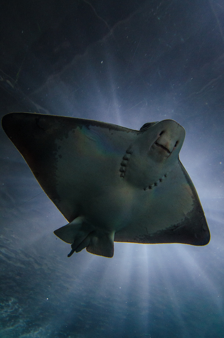 Photograph Holy Stingray by Federico Casares on 500px