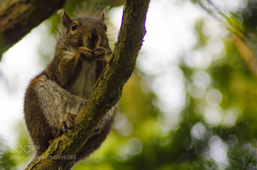 Photograph Squirrel having dinner by Federico Casares on 500px