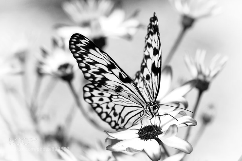 Photograph butterfly by Nino Matasa on 500px