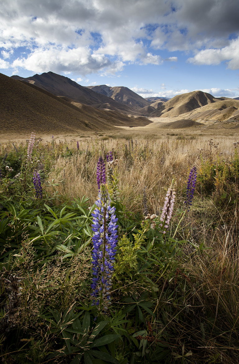 Photograph Lindis Lupins by Nathan Kaso on 500px