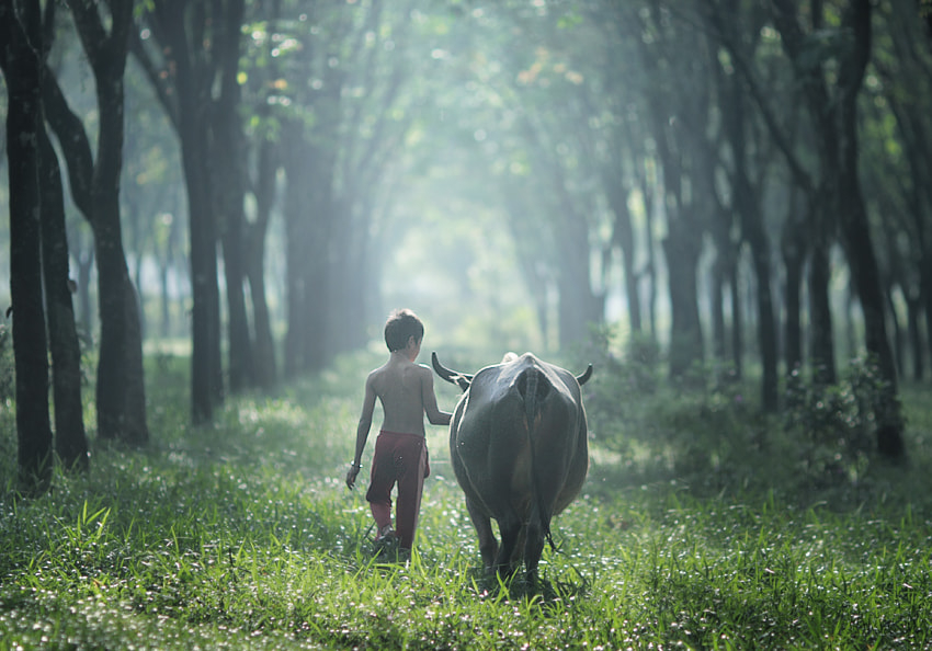 Photograph Going Home by JD Ardiansyah on 500px