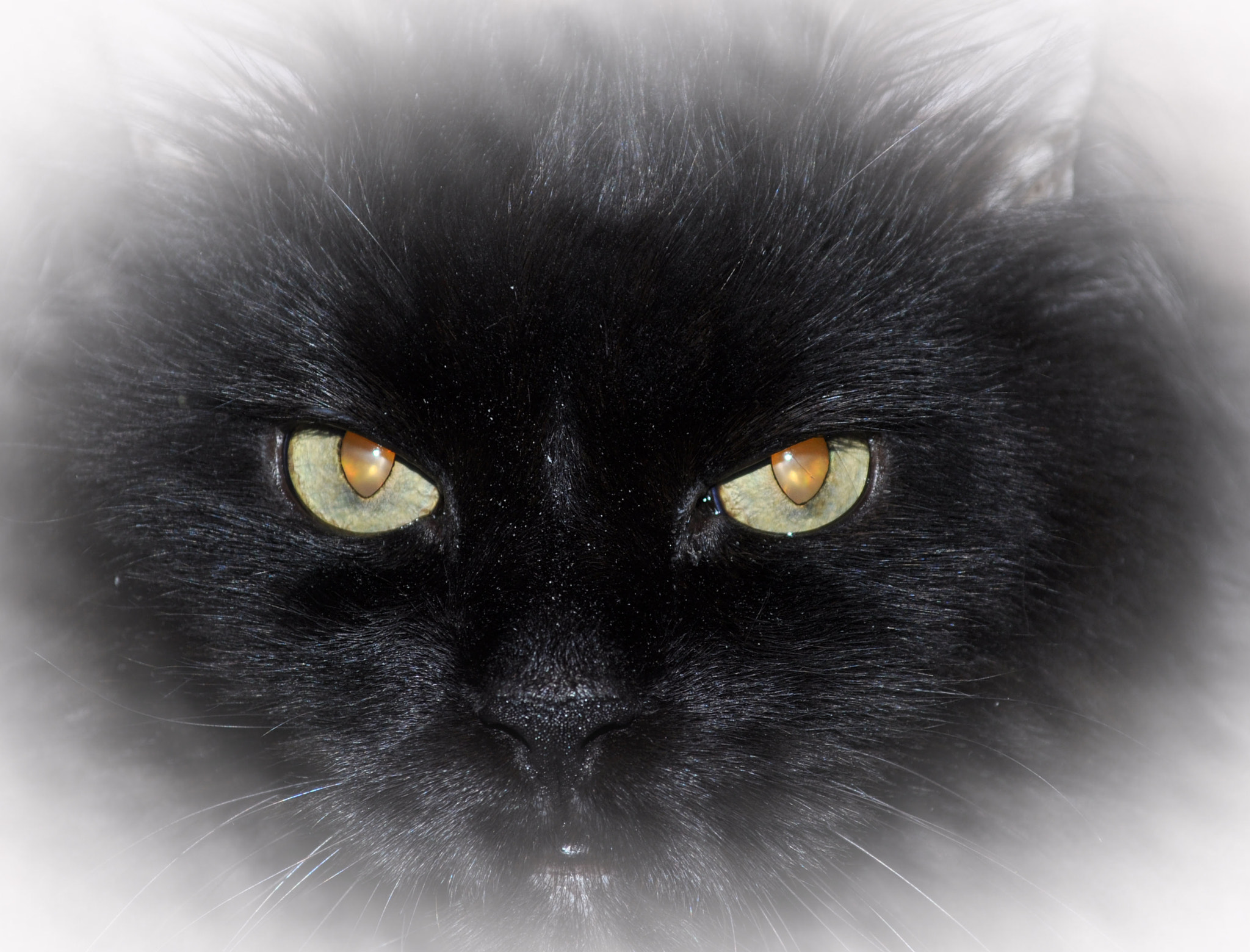 Photograph The Eyes Of Truffles by Mark Luftig on 500px