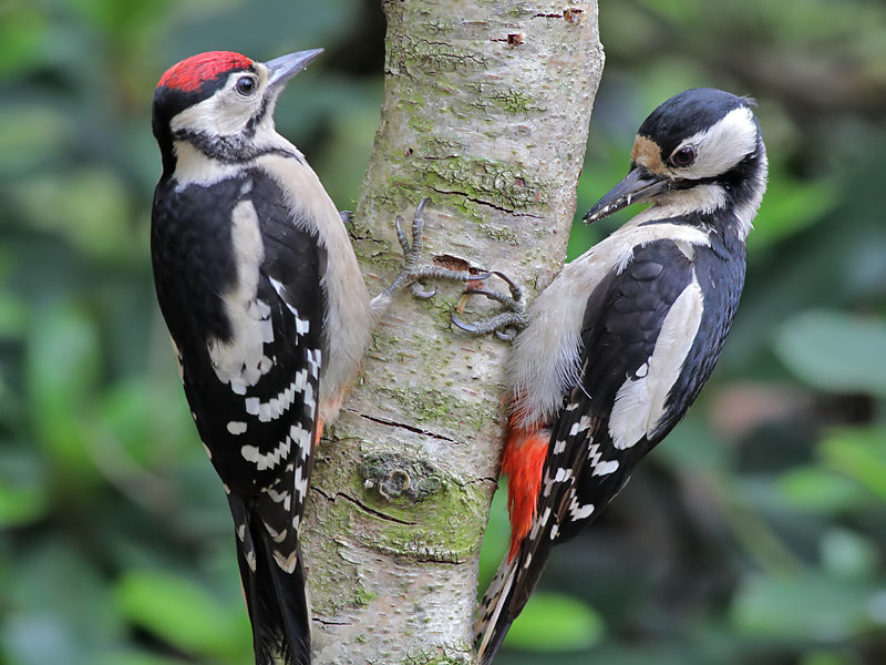 Photograph Mother & Child Woodpecker by Aat Bender on 500px