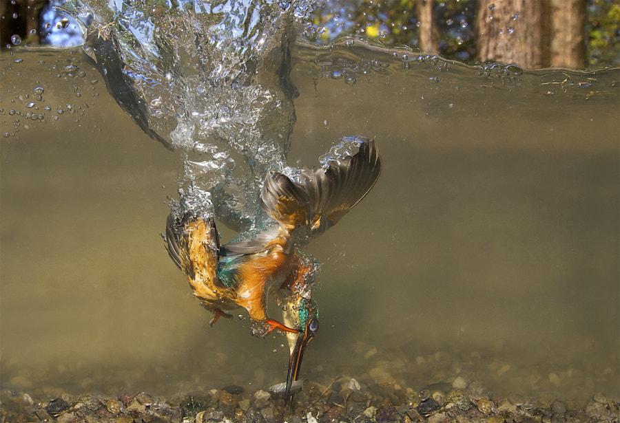 Flying underwater by Marco Redaelli on 500px.com
