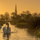 I have been to this location a few times and on this occasion I wore some waders and sat in the freezing water for over an hour waiting to get some swans in the right place. Thankfully they came.