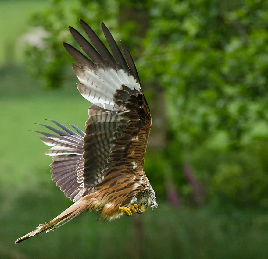 Photograph Lunch on the fly by Gerwyn Williams on 500px